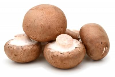 Гъби Печурка Кралска