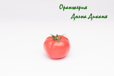 Розов домат от Оранжерия Долна Диканя